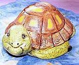 Schildkröte M