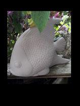Fisch Fridolin