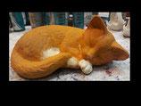 Katze Rambo eingerollt schlafend