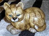Katze Lolli gehockt