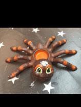 Spinnenteelicht
