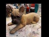 französische Bulldogge Benno