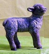 Schaf stehend rechts schauend