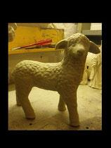 Schaf Tucki stehend