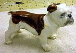 Englische Bulldogge Walze