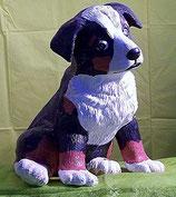 Berner Sennenhund Jerry