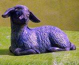 Schaf liegend links schauend