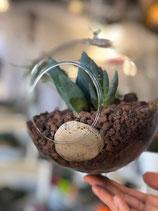 Suculenta en esfera de cristal colgante