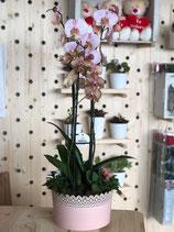 Centro Orquídeas doble vara