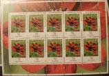 Bund 3189 Klb 70 ct Schokoladenkosmee