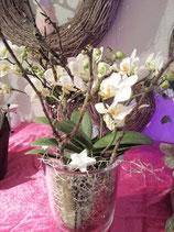 Orchideen ausgarniert