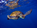 Guided Snorkeling tour in turtles area & Boat ride