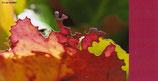 """Geschenkkarten-Set """"Herbst"""""""