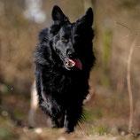 Beratung für einen gesunden erwachsenen Hund