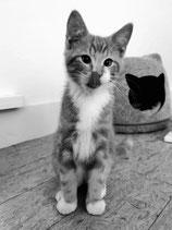 Beratung für Kitten ab der 8. Lebenswoche bis 12. Lebensmonat