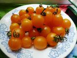 -Черри помидоры Yellow Marvel