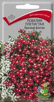 Лобелия плетистая Красный фонтан