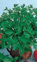 Петрушка листовая Быстроотрастающая 300 дражже