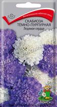 Скабиоза тёмно-пурпурная Ледяное сердце