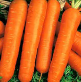 Морковь НАСТЕНА гранулы 300шт