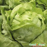 Салат коченный СПРИНТЕР (серия Северные овощи)
