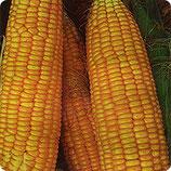 Кукуруза РАННЯЯ ЛАКОМКА