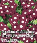 Вербена гибридная КВАРЦ ХР БУРГУНДИ С ГЛАЗКОМ