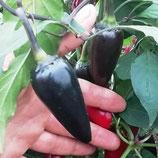 Перец Халапеньё Чёрный - Jalapeno Black острый
