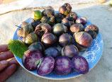 Физалис Фиолетовый - Purple Tomatillo ( от Гусева )