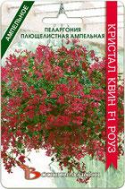 Пеларгония плющелистная ампельная Кристал Квин F1 Роуз