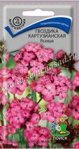 Гвоздика Картузианская розовая
