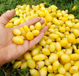 Помидоры Черри Сумасшедшие Ягоды — Bаrry's Crazy Cherry Tomato