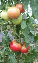 完熟トマト$ミニトマトセット 農薬、化学肥料、除草剤不使用!(送料無料)