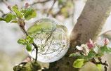 Postkarte-Apfelblütenbaum