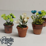 Macetas con flor