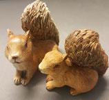 Eichhörnchen  Paar