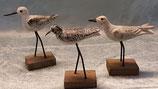 Strand Vögel