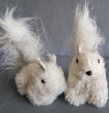 Glitzer Eichhörnchen