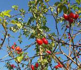 Wildkräuter(n): Kräuter(n) im Herbst