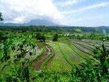 Indonesia Reis Terasse