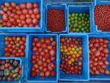 Tomates ancienne