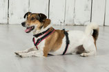 BRUSTGESCHIRR SOFTY SMALL: 20 mm Gurtbandbreite für kleine Hunde.