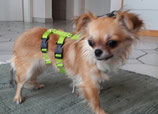 SICHERHEITSGESCHIRR BASIC XXS: 15mm Gurtband für kleinste Hunde.