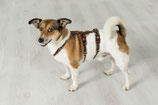 SICHERHEITSGESCHIRR SMALL: 20 mm Reflektorgurtband Breite  für kleine Hunde.
