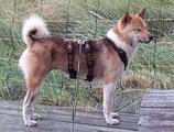 SICHERHEITSGESCHIRR SOFTY SMALL: 20 mm Gurtband Breite mit Mesh unterfüttert für kleinere Hunde.