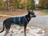 SICHERHEITSGESCHIRR SOFTY LARGE: 30 mm Gurtband Breite  mit Mesh unterfüttert für mittelgroße Hunde