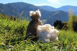 Naturreine lose Schafwolle