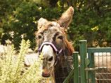 Grundlagen der Esel & Muli Haltung Seminar