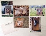 5 Postkarten im Set Kuh-Motive