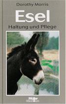 Morris Dorothy, Esel - Haltung und Pflege
